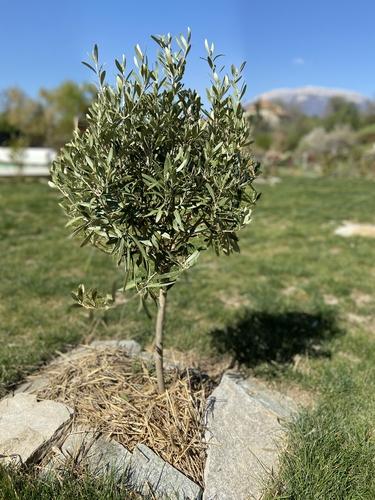 olivier une pause au vert